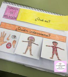 Body Systems, Science And Nature, Social Studies, Teacher, Organization, Photo And Video, Instagram, Habitats, Montessori