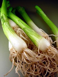 Scallions from the Garden