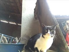Başka bir kedi daha:)