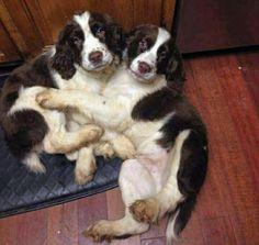 Happy Puppy Day!!