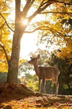In a Perfect World... - sublim-ature:   Nara Park, Japan Nuttapoom...
