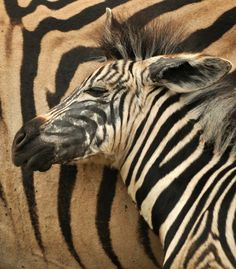 South African images of the day - page 10 African Image, Tourist Information, Image Of The Day, South Africa