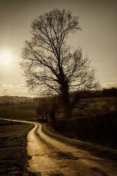 Follow the light by TouTouke - Nightfox on Flickr.