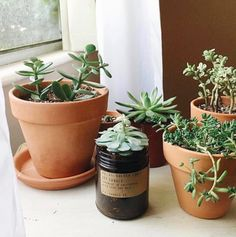 jar = perfect propagation station : Tag us in your re-use for a chance to be featured Reuse Candle Jars, Candle Containers, Recycled Jars, Old Candles, Ways To Recycle, Makeup Brush Holders, Planter Pots, Recycling, Instagram Posts