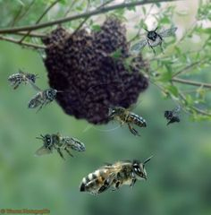 How To Capture A Swarm Of Bees