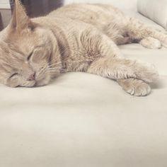 Pre-Super Bowl nap time! #cats #catsofinstagram #super #bowl #superbowl #football #nap #tired #sleepingcat #catstagram #catlovers #catlife