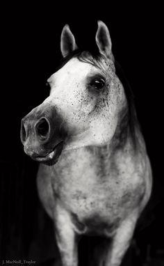 the arabian by gypsymarestudios, via Flickr