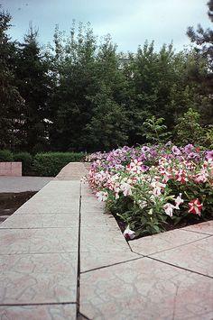 City flowers 2