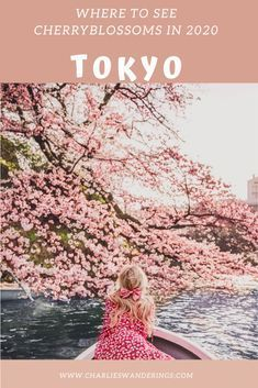 Https Www Realestate Com Au Blog Wp Content Uploads 2018 05 03161812 Charry Blossoms Hero Jpg Cherry Blossom Tree How To Grow Cherries Blossom Trees