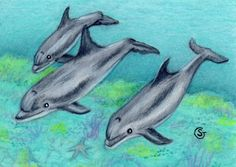 ACEO Dolphin Reef Ocean Art ORIGINAL MIxed Media Sherry Goeben #Miniature