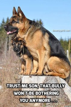 GERMAN SHEPHERDS ARE BADASS