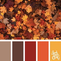 25 Color Palettes Inspired by the Pantone Fall 2017 Color Trends . - 25 Color Palettes Inspired by the Pantone Fall 2017 Color Trends This collection of - Fall 2017 Colors, Fall Color Schemes, Fall Color Palette, Colour Pallette, Color Combos, Fall Paint Colors, Warm Color Palettes, Retro Color Palette, Orange Color Schemes