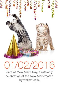 Have you heard of Mew Year's Day? Be sure to celebrate with your feline friend!