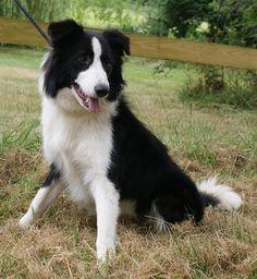 Miller at Allsorts Dog Rescue