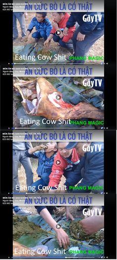 #Eating Cow Shit Pranks, Hd Video, Troll, Memes, Funny, Meme, Hd Movies, Funny Parenting