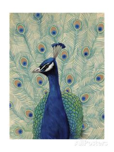 Blue Peacock II Posters by Tim - AllPosters.ca