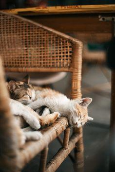 Lovely-KittyCats