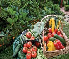 Organic Gardening – Tips For Summer Growing | gardening tips for beginners