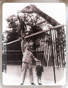 ZSL London zoo (1950)