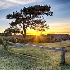 The of Britain's 13 national parks lacks picturesque lakes and dramatic peaks, but it definitely shouldn't be overlooked. Beautiful Nature Pictures, Nature Pics, Forest Sunset, Photo Competition, New Forest, English Countryside, Photo Contest, Hampshire, Great Britain