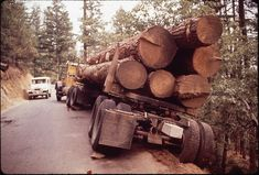 Leather Rifle Sling, Old Trees, Forest Service, Automobile, Trucks, Things Happen, Wood, Photos, Car