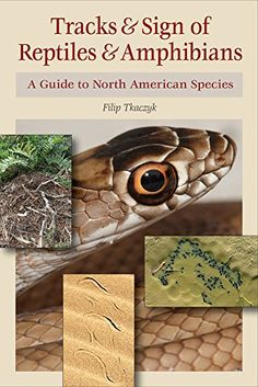 Tracks  Sign of Reptiles and Amphibians A Guide to North American Species