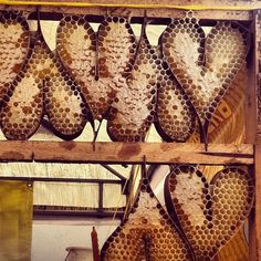 Heart-shaped honey combs at a fair.  Kolomna, Russia.