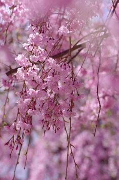 YuukoNishiwaki spring