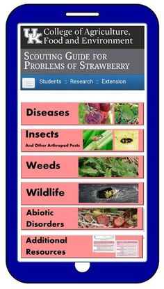 New Resource: Strawberry Scout Website Garden Solutions, Online Paper, Scouting, Agriculture, Strawberries, Kentucky, Sick, Backyard, Website