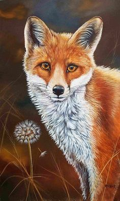 Fox Fine Art Print by British Wildlife Artist Helen Clark. Signed and Limited to 500