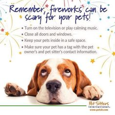 Fireworks are scary to pets - what to do to calm them Pet Sitters International, Calming Music, Faith In Love, Your Turn, Dog Quotes, Fireworks, Fur Babies, Your Pet, Scary