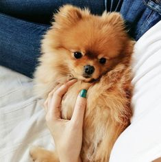 cuties #bekind #animal #cute #cuteanimals pinterest: @annajrj ✨