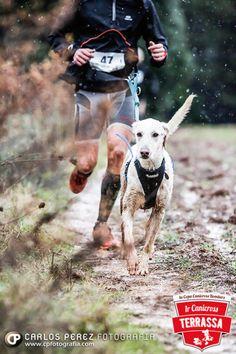 Dog/human sport.  Canicross Terrassa 2014 by Carlos Perez on qualitydogs.tumblr.com.  #dogs #dogsports