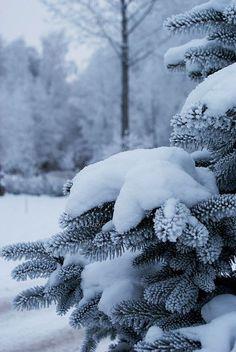 Nature Landscape, Winter Landscape, Winter Love, Winter Snow, Winter Photography, Nature Photography, Winter Magic, Winter's Tale, Winter Scenery