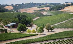 With 40 Varietals of Wine, Paso Robles Is a Taster's Paradise   7x7