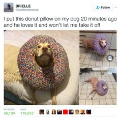 This very fashionable dog. | 17 Dogs Who Are Very, Very Good Dogs