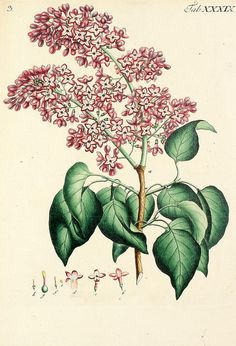 Amazing, beautiful prints from the Biodiversity Heritage Library (http://www.flickr.com/photos/biodivlibrary/sets/)