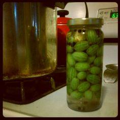 Homemade Gherkin Pickles
