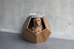 dog cave by pup and kit