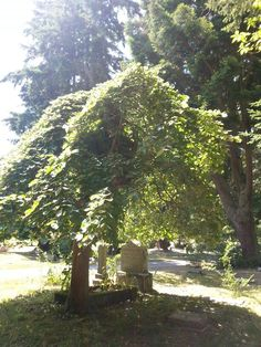 Langley Cemetery, Whidbey Island, WA