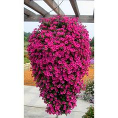 Proven Winners Supertunia Vista Fuchsia Petunia 4.25 in. Grande-SUPPRW4016520 at The Home Depot