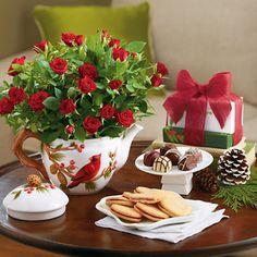 Holiday Mini Rose Plant Gift   Coffee & Tea   Harry & David