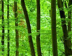 Muurprint romantische bos