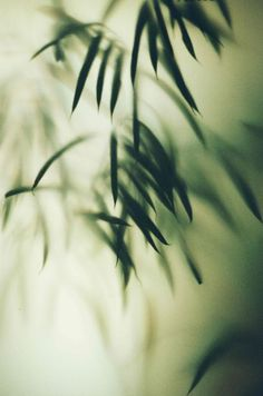 marion berrin. Head In The Clouds, Focus Images, Foliage Plants, Nature Plants, Green Nature, Motif Floral, Light And Shadow, Belle Photo, Shades Of Green
