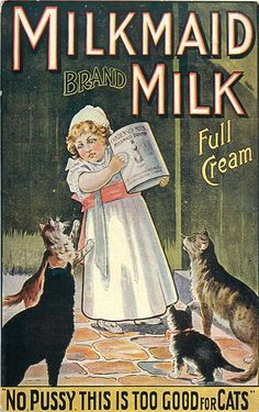 "MILKMAID BRAND MILK, FULL CREAM, ""NO PUSSY THIS IS TOO GOOD FOR CATS"" Vintage advertising postcard"