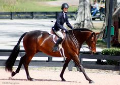 diaryofaworkingstudent: Velvet Affair and Arly Golombek. This horse is gorgeous!!!