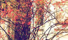 #photography #trees #outside #flora #maine #murphyempiredesign #inspiration #spring #floweringtrees #azalea #pink #texture #parkstreetportland