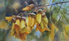 Kowhai Tree Blossoms, watercolor, by Svetlana Orinko Painting Competition, Kiwiana, Impressionism, New Art, Landscape Paintings, Original Artwork, Watercolor, Painting Flowers, Gallery