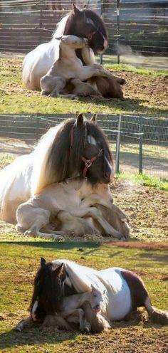 Bebê Cavalo Afagos no colo da mamãe | Cutest Paw