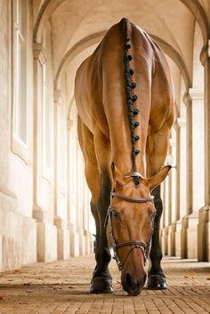 Lunch break by Erik Kunddahl on 500px, fancy horse braid, beautiful horse!